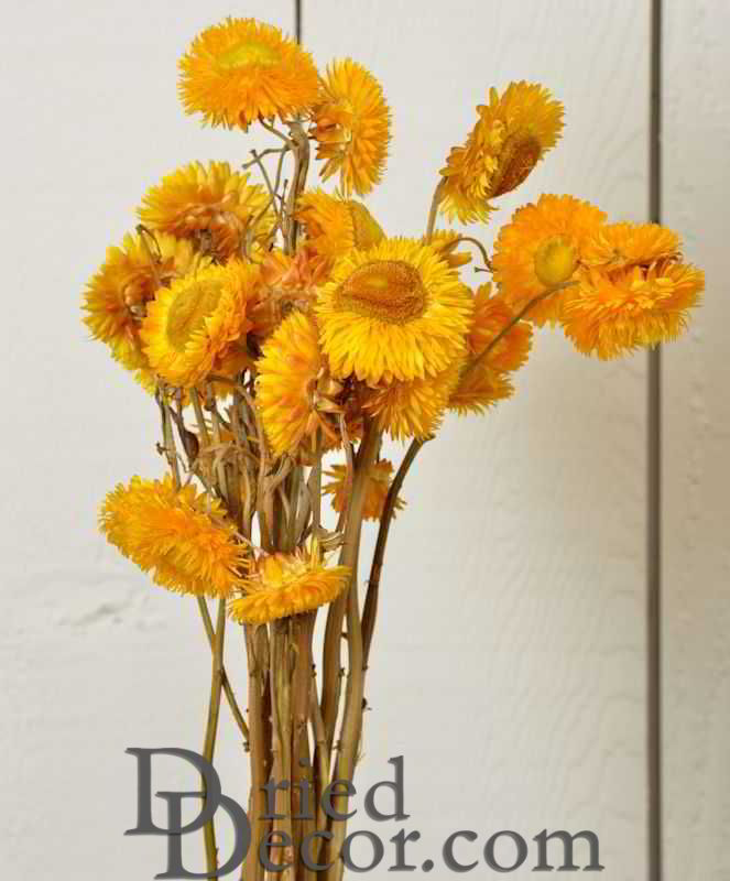 Dried StrawFlowers - Straw Flowers - Click Image to Close