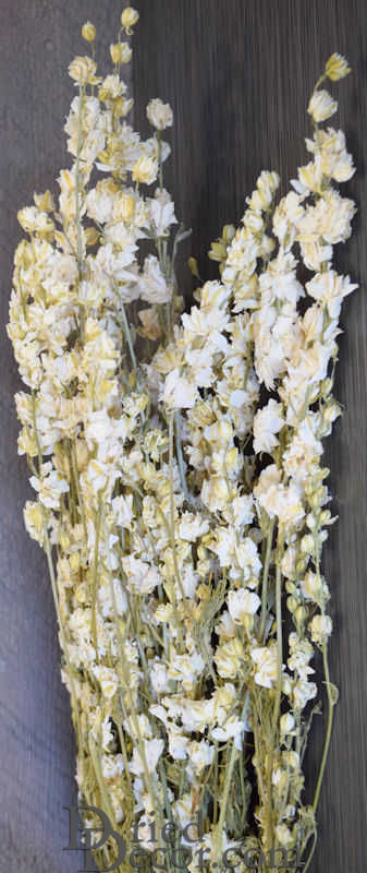 Dried white larkspur flowers for sale white delphinium dried dried white larkspur flowers for sale larger image mightylinksfo