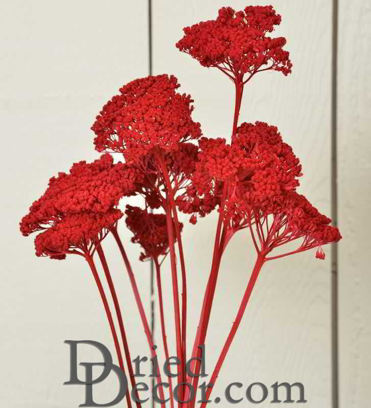 Dyed Yarrow Flower Bunches - Click Image to Close