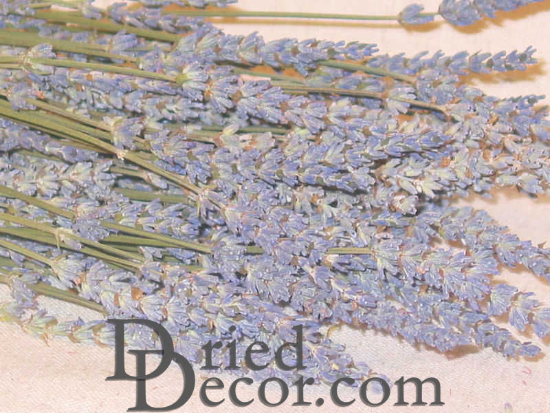 Dried Lavender Bunch - Grosso (French) - Click Image to Close