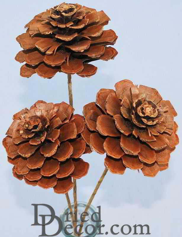 Pine Cone Roses - Click Image to Close