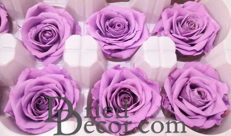 Preserved Roses - 8 per Order - Colors: Purple, Yellow, Orange - Click Image to Close