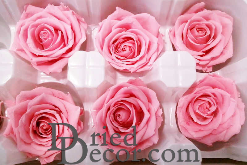 Preserved Roses - 8 Preserved Roses per Order - Colors: Red - White ...