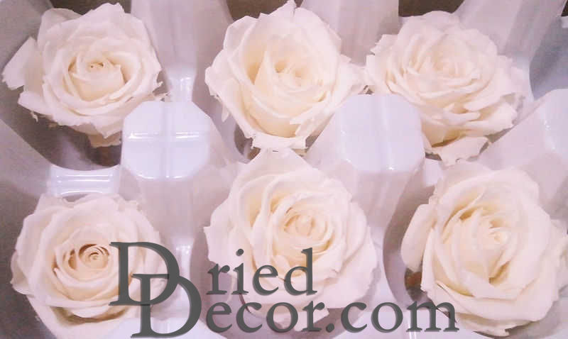 Preserved Roses - 8 per Order - Colors: Red - White - Click Image to Close