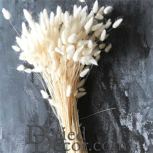 Dried Bunny Tails Grass - Bleached - Click Image to Close