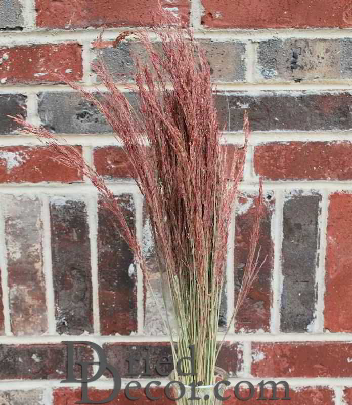 Dried Ruby Red Silk Grass - Click Image to Close