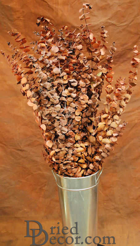 Preserved Eucalyptus Stems for sale - Harvest - Click Image to Close