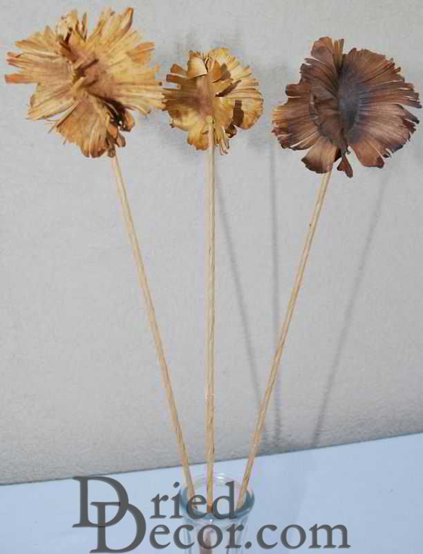 Dried Butterfly Pods - Stemmed - Click Image to Close
