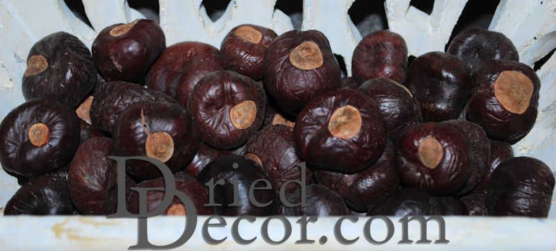 Horse Chestnuts - Large/Small Size Hourse Chest Nuts - Click Image to Close