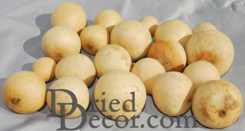 Dried Field Gourds - Small Size - Click Image to Close