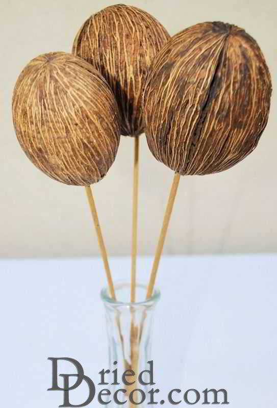 Dried Mintolla Balls (Pods) - Click Image to Close