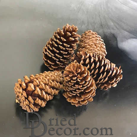 Dried Pinecones Medium Size 3-4 inch - Click Image to Close