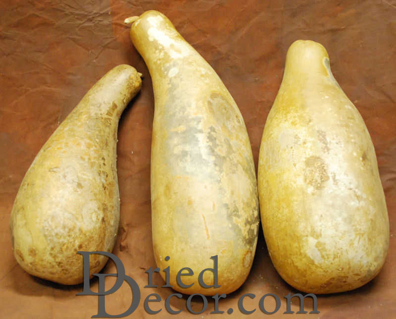Dried Gourds - Jumbo Size - Click Image to Close