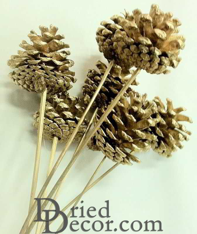 larger image & Austriaca Pine Cones - Gold Painted Holiday