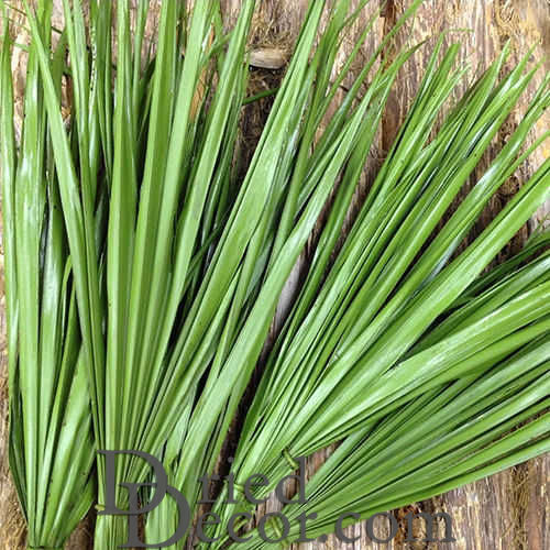 Dried Palm Leaf Bunch - Bulb Foliage - Click Image to Close