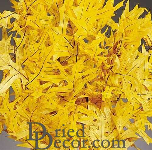 Preserved Yellow Leaves (1 LB dried leaves) - Click Image to Close