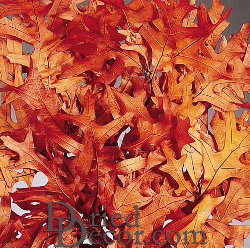 Preserved Rust Oak Leaves - Click Image to Close