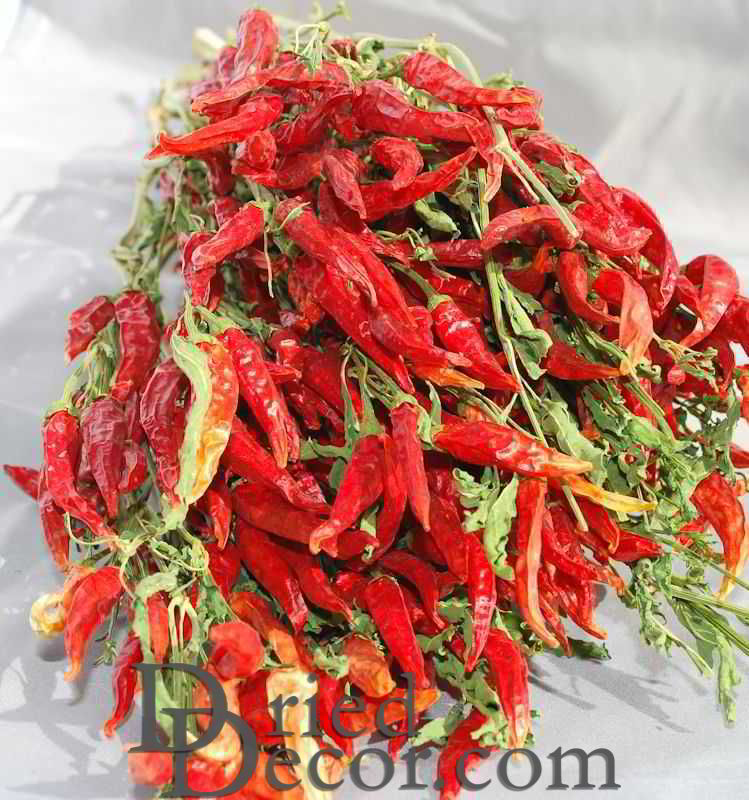 Dried Red Chili Peppers Bunch - Click Image to Close
