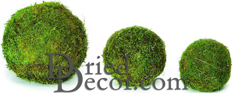 Decorative Moss Balls Dried Moss Balls Preserved 60160 inch diameter 2