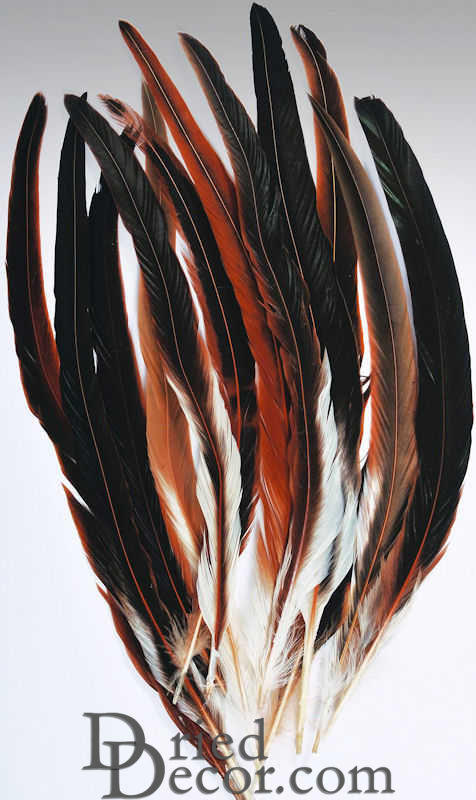 Rooster Tail Feathers Rooster Feathers For Sale Black Rooster