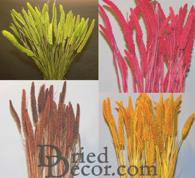 Dried Chinese Millet - China Millet - Click Image to Close