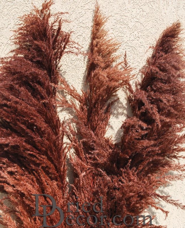 Dried Pampas Grass - Brown Color - Click Image to Close