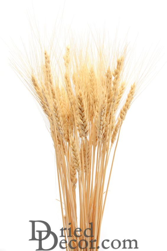 Bulk Case Of Wheat Stalks 15lb Rhdrieddecor: Dried Grasses Home Decor At Home Improvement Advice