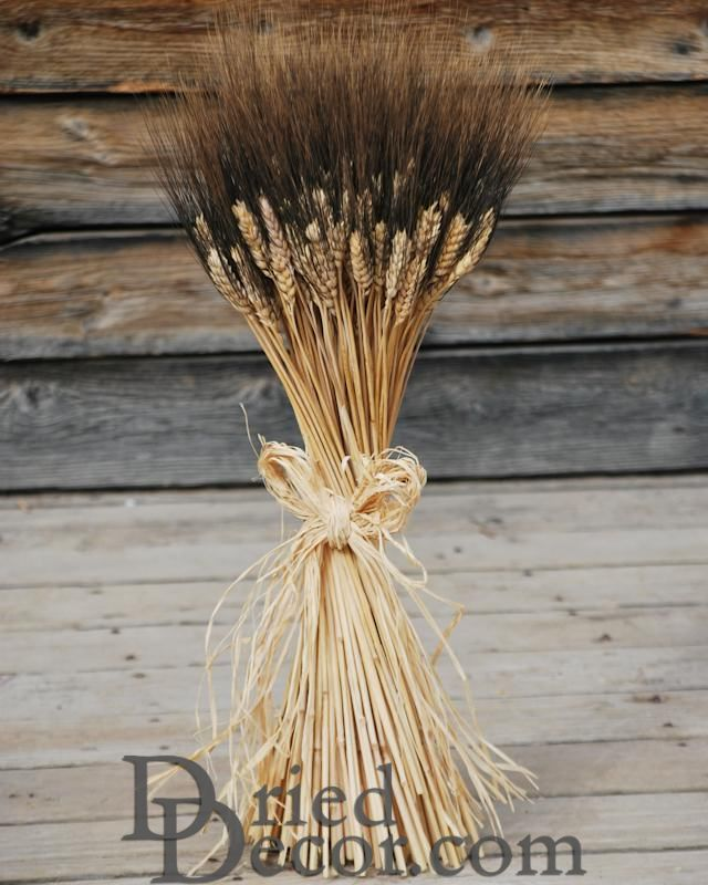 Large Dried Blackbeard Wheat Bunch - Click Image to Close