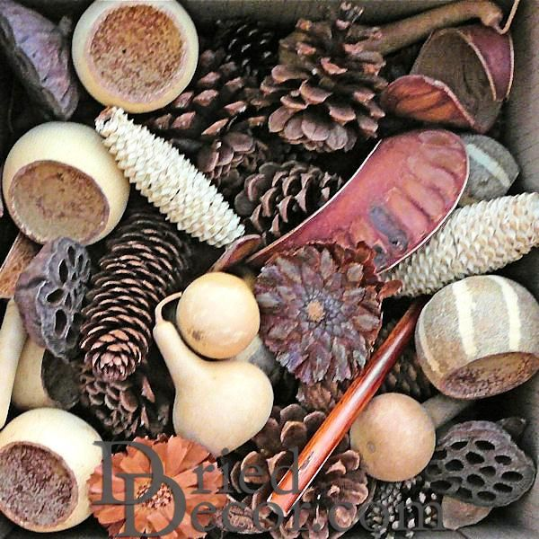 Pine Cones & Dried Pods - Click Image to Close