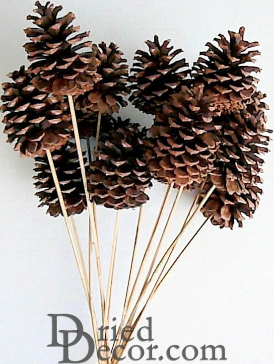 Stemmed Ponderosa Pine Cones - Natural - Click Image to Close