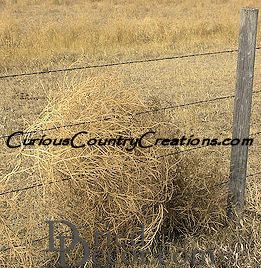 Tumbleweed Seeds - Click Image to Close