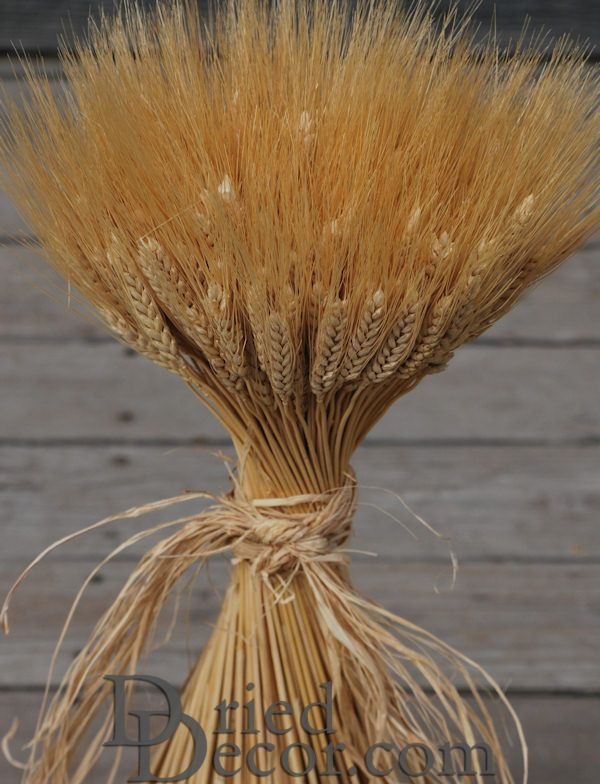 Large dried wheat bunches bundles wedding centerpieces 1lb larger image junglespirit Gallery