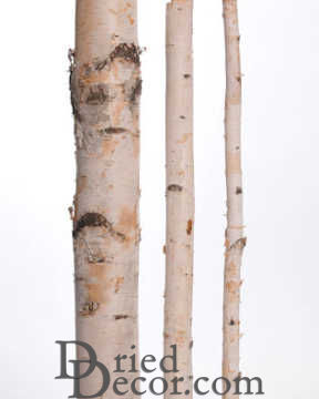 White Birch Poles For Sale - Decorative