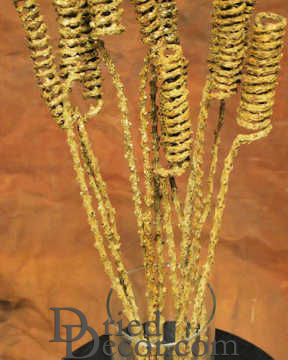 Dried Tail Springs