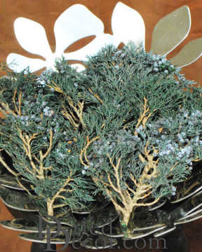 Preserved Juniper Tips -