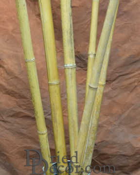 Long Dried Bamboo Stalks