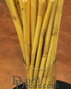 Dried Bamboo Stalks Dried