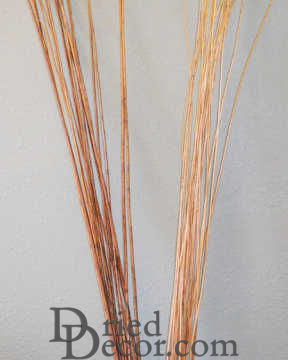 Long Willow Branches / Sticks