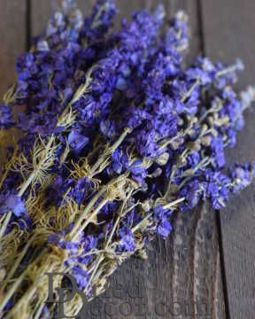 Dried Dark Blue Larkspur Flower For Sale [HM,LJ,717435162479]