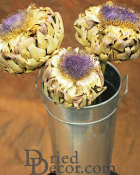 Dried Artichoke Blooms on Stem - Dried Artichoke Flowers