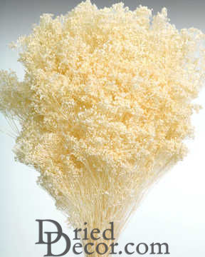 Dried Babys Breath Colors Dried Gypsophila For Sale