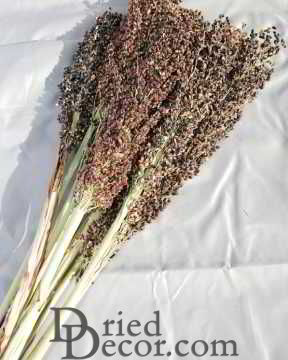 Dried Black Broom Corn
