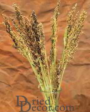 Dried Red Broom Corn