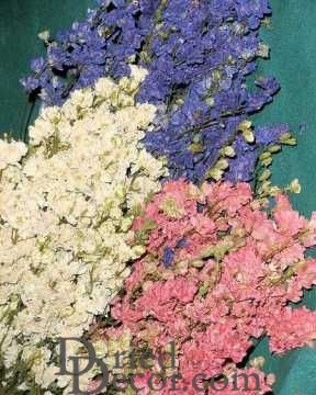 Dried Larkspur Flower For Sale