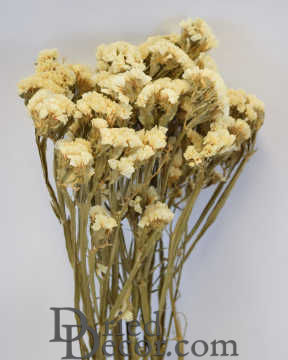 Dried Statice Sinuata Flower Bunch - White