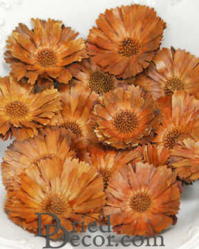 Dried Protea Flower Heads