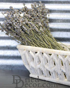 Dried English Lavender Bunch - Large Bundle - Royal Velvet [AF,LJ,009134050295]