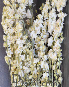 Dried White Larkspur Flowers For Sale
