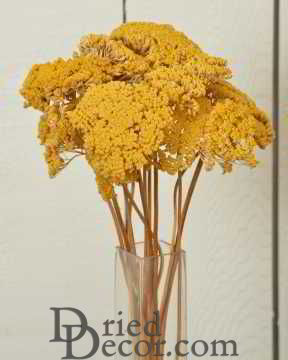 Dried Yarrow Bunches - Yellow [BS,HM,SC,LJ,009053160617]