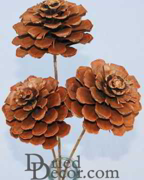 Pine Cone Roses Our